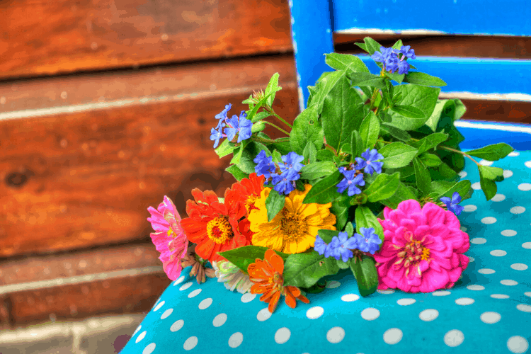 what planting zones are good for zinnias