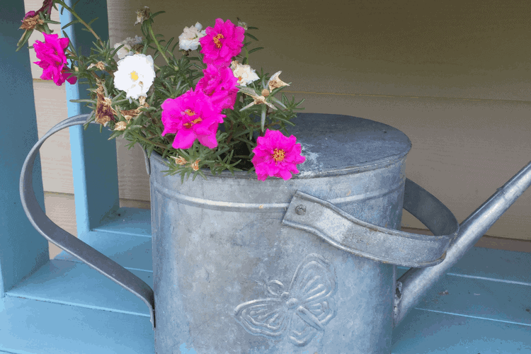 container gardening projects
