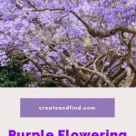 purple flowering trees