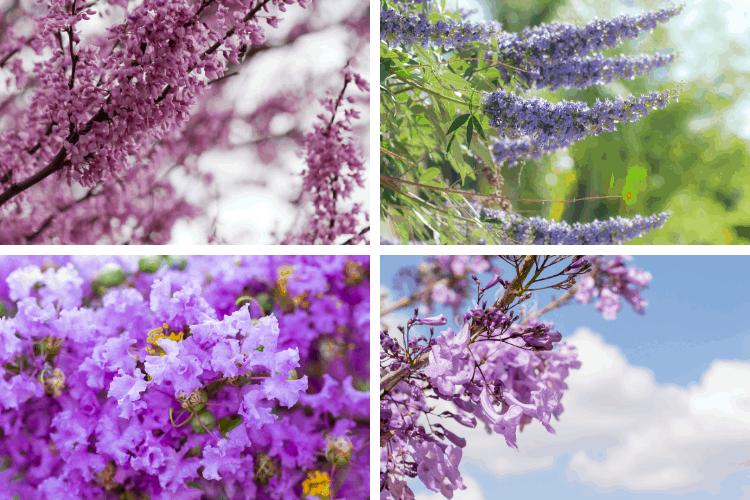 6 Beautiful Purple Flowering Trees