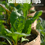 DIY container gardening tips for vegetables and herbs
