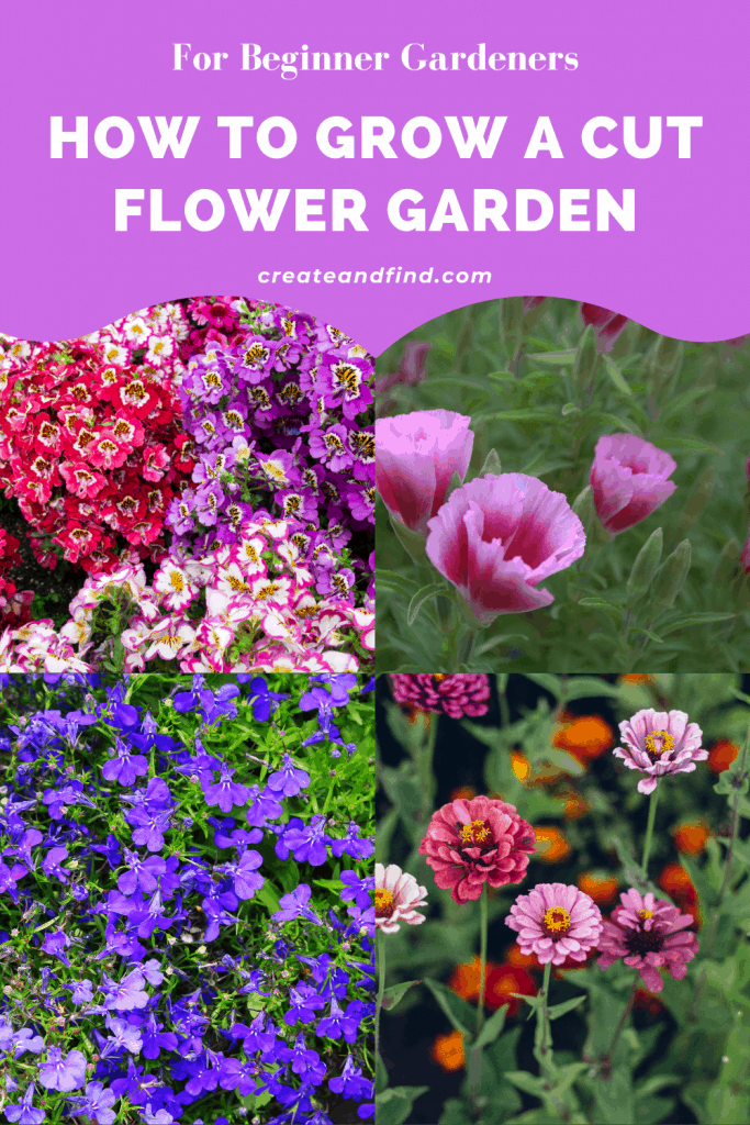 How to Grow A cut Flower Garden for Beginners