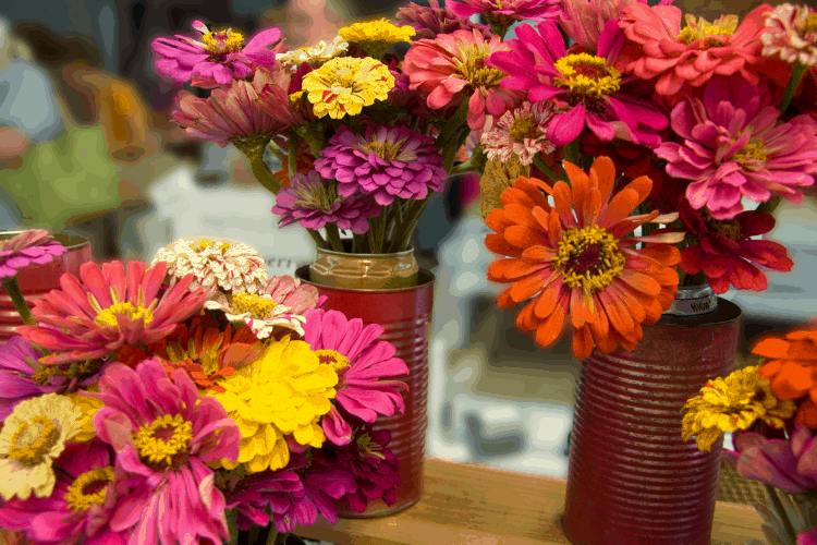how to start a cut flower garden for beginners - zinnias